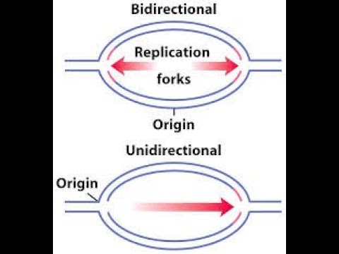 Uni And Bidirectional Replication Of Dna Mol Biology By Jjs Sir For Class 12 Neet Kvpy Olympiads Youtube