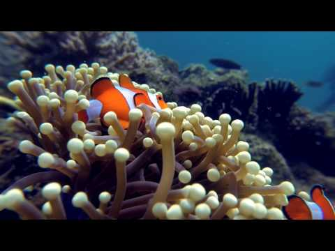 Raja Ampat 2016 - Kri Eco Resort - GoPro Hero 3 - long version - Full HD