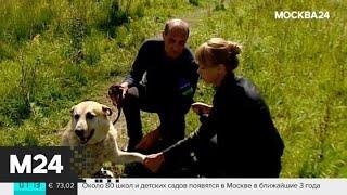 В Королеве мужчина напал на собаку с ножом - Москва 24