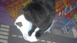 #2 Котята скоттиш страйт, фолд Донецк. Kittens Scottish Straight, Fold Donetsk.(, 2017-04-14T13:40:16.000Z)
