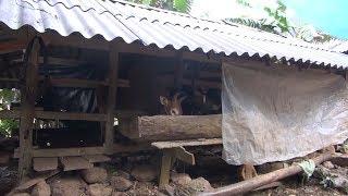 Tin Tức 24h Mới Nhất  :Cao Bằng tăng cường phòng chống rét, dịch bệnh cho đàn gia súc