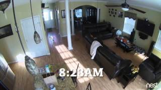 Roomba Spreads Dog Poop