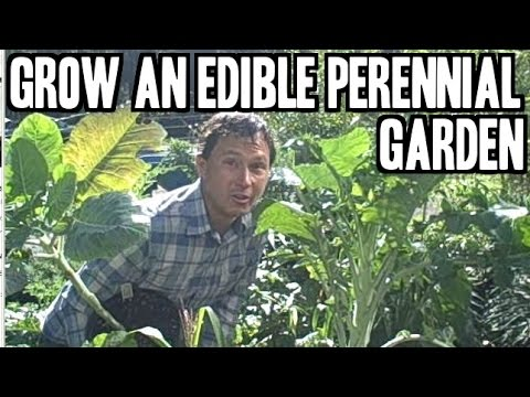 Grow an Edible Biodiversity Perennial Garden with Organic Plants