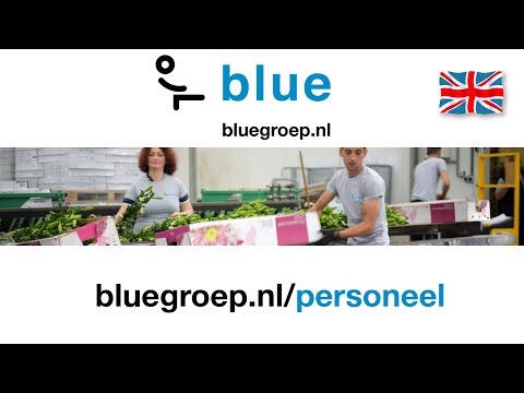 Blue Groep is looking for employees (English)