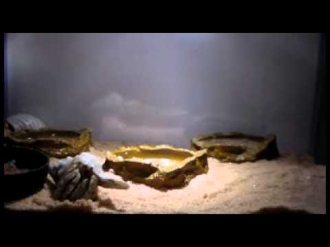 Digging A Crab Hole