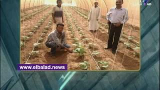 أحمد موسى: رسائل الرئيس في «غيط العنب» تحمل بشائر خير.. فيديو