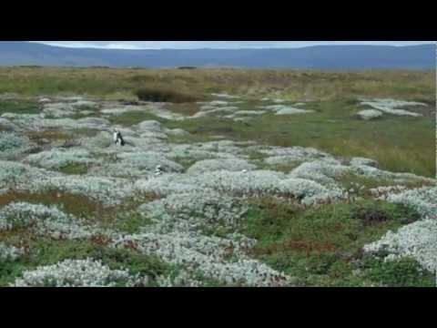 Otway Penguin Reserve, Punta Arenas, Chile December 2012