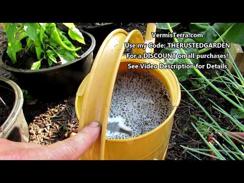 General Care For A Sunken Container Pepper/Vegetable Garden: Insoluble & Soluble Fertilizing & More