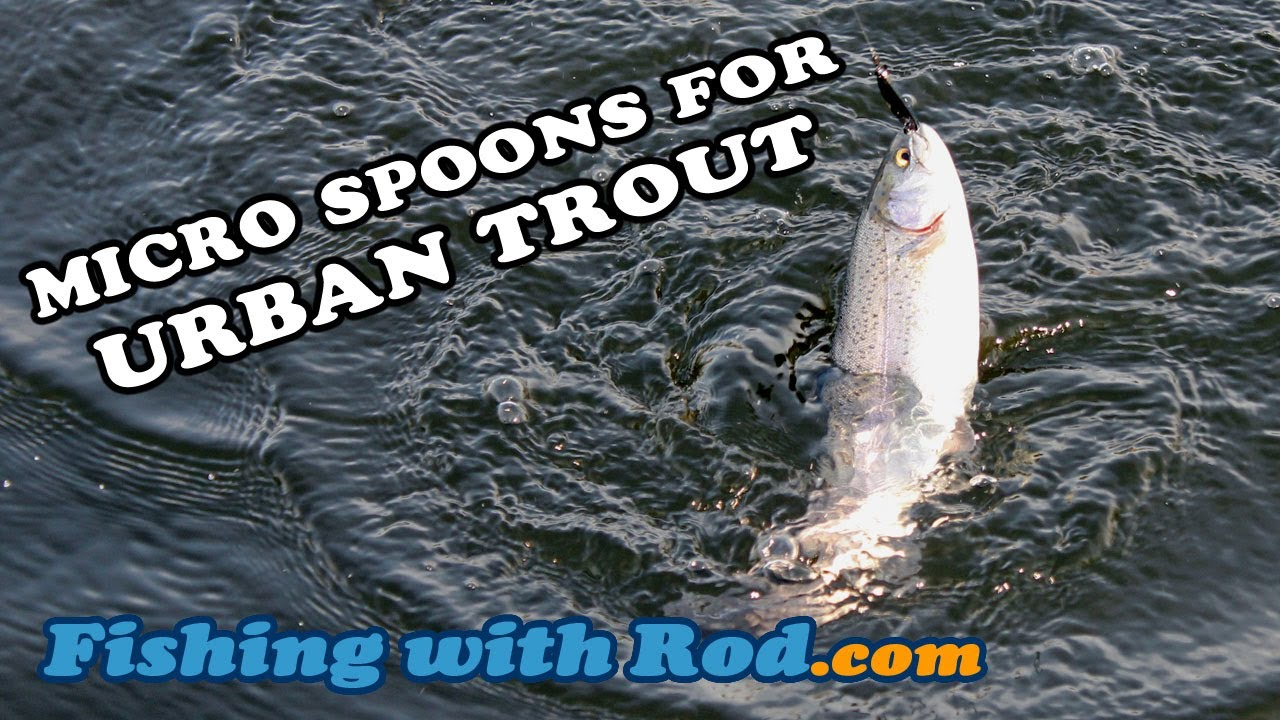 micro spoons for urban trout   fishing with rod - youtube, Fly Fishing Bait