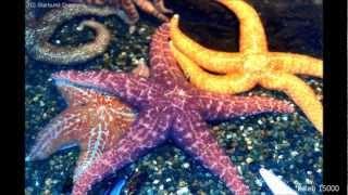 Ocean Creatures HD