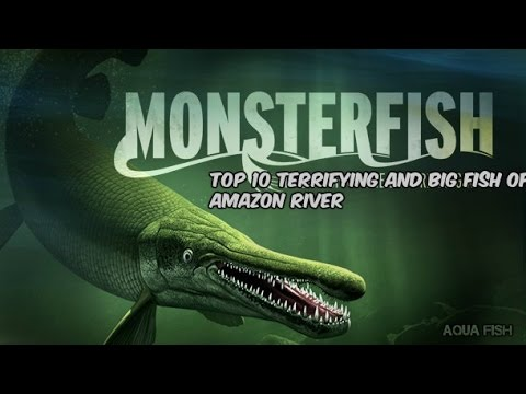 Top 10 Terrifying And Big Fish Of The Amazon River