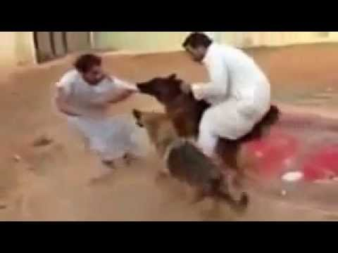 German Shepherd Attack - YouTube
