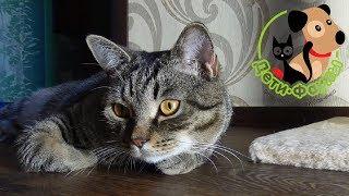 Акне у кошек. Основные симптомы, причины и как помочь