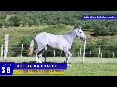 LOTE 38 - Odelia da Chalet