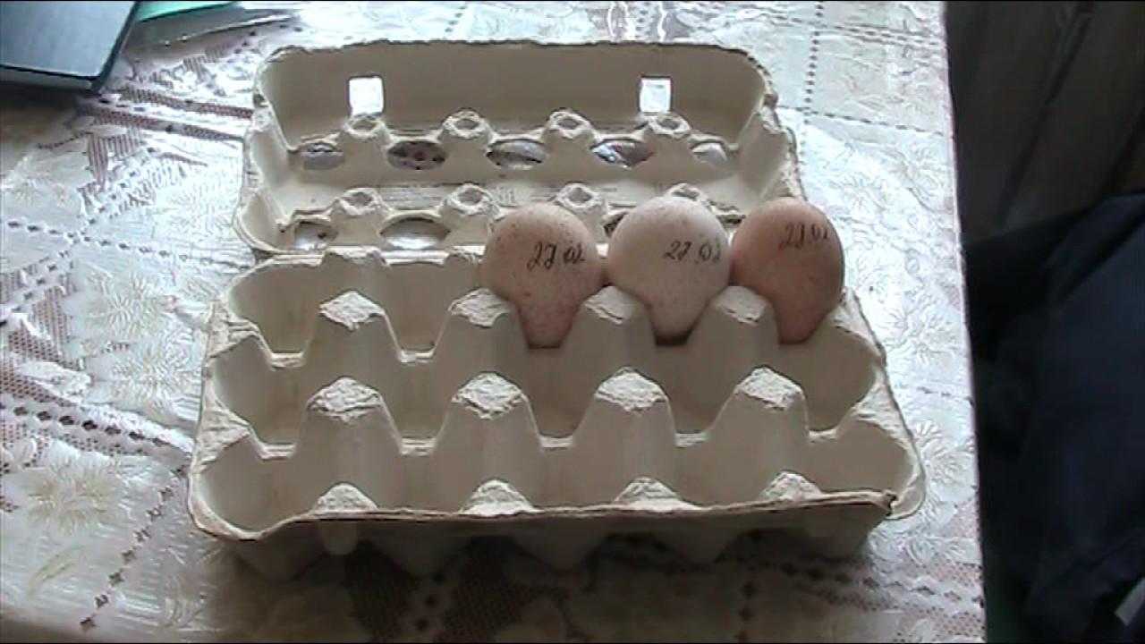 хранение инкубационного яйца//в холодильнике// ч.2.(заключительная .
