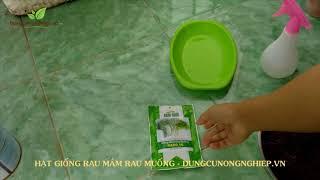 Trên tay Hạt giống rau mầm Rau Muống tốt cho sức khỏe   Dungcunongnghiep.vn