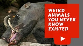 weird animals you never know existed