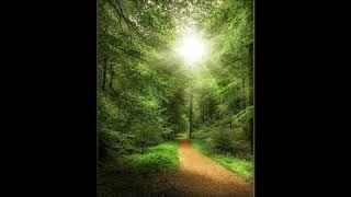 Ганюшкина Алла - «Прихожу в этот лес полуспящий» (стихи Максима Сафиулина)