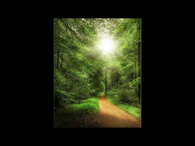 Изображение предпросмотра прочтения – АллаГанюшкина читает произведение «Прихожу в этот леспоуспящий» М.С.Сафиулина