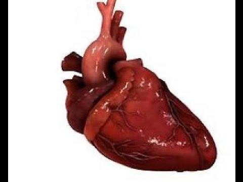 Сколько сердце болит