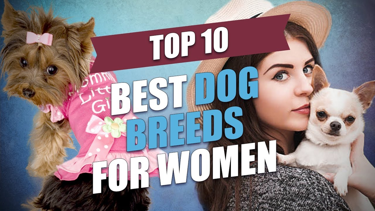 dog breeds women