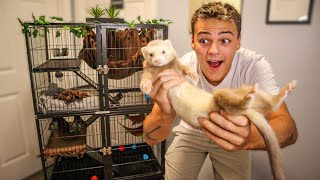 My *NEW* PET FERRET!!