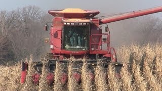 Galusha Farm - Case IH 2388 Combine on November 15, 2012