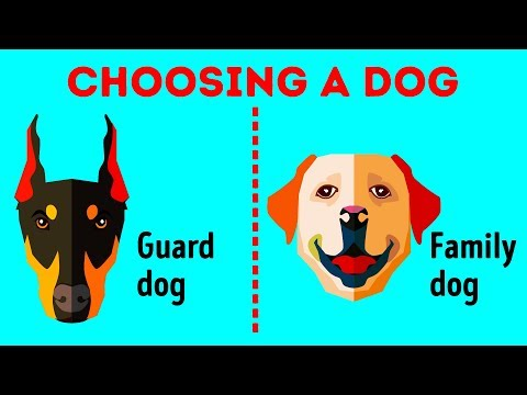 how-to-choose-the-perfect-dog-breed-just-for-you