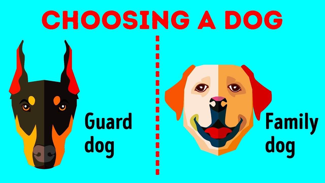 How To Choose The Perfect Dog Breed Just For You Youtube