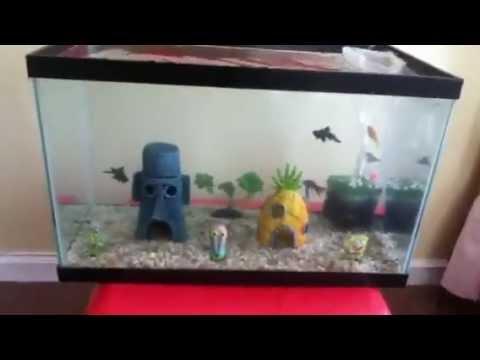 10 gallon goldfish spongebob aquarium update 2