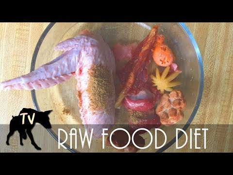 Close up view Raw Feeding Dog Food Mukbang