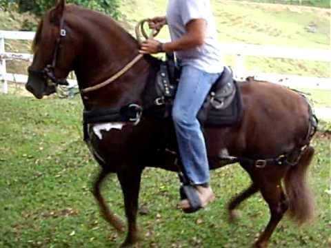 Hermoso caballo de paso fino 2 en venta youtube for Sillas para caballos