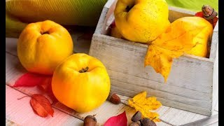АЙВА – «железный» фрукт, НЕОЦЕНИМАЯ ПОЛЬЗА и противопоказания!