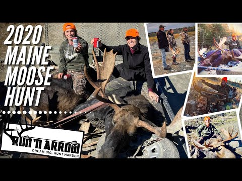 2020 Maine Moose Hunt (Two Bulls down!!!)