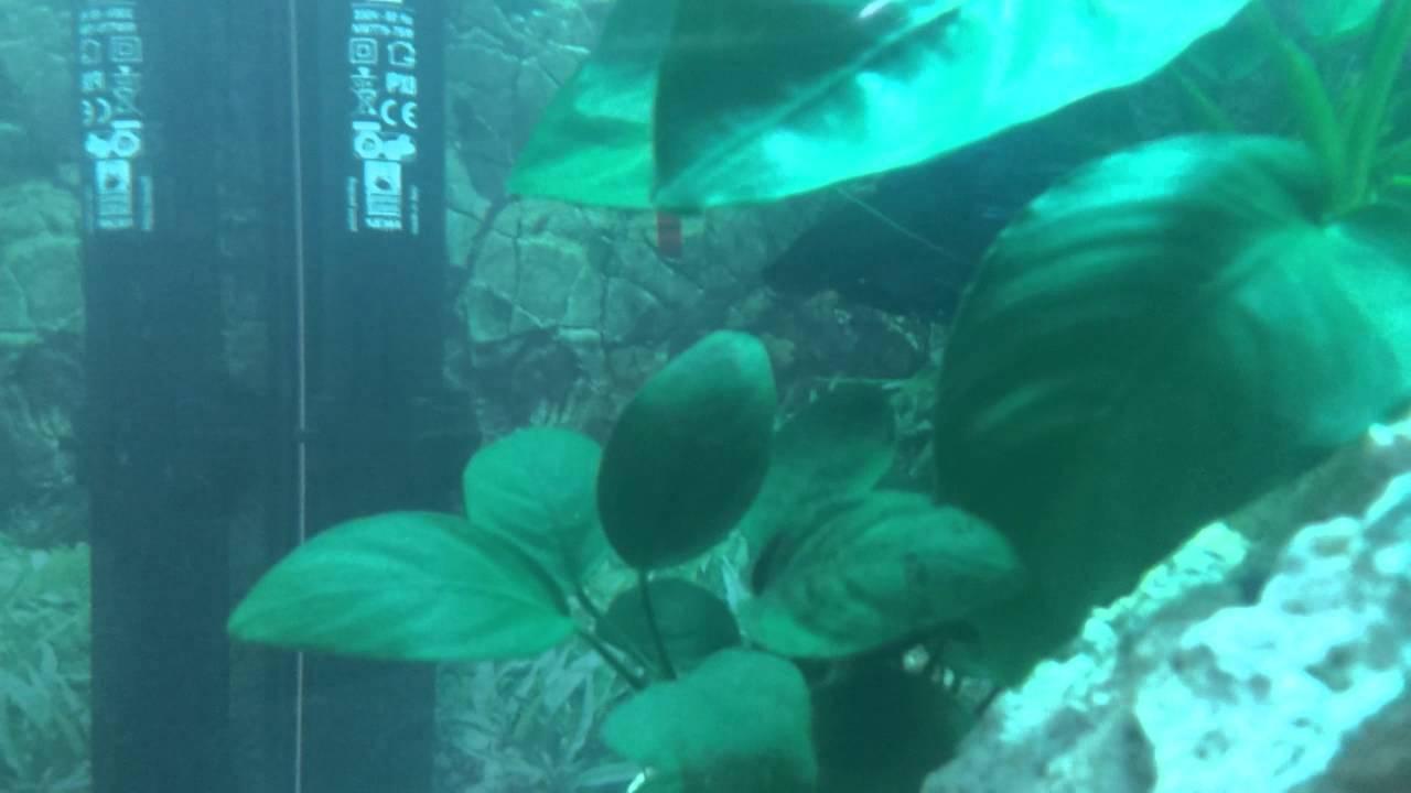 nuovo allestimento acquario per betta splendens - youtube - Allestimento Acquario Per Betta Splendens