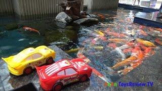 Bé đi xem cá cảnh với ô tô Mc Queen và Angry Bird ❤ AnAn ToysReview TV ❤