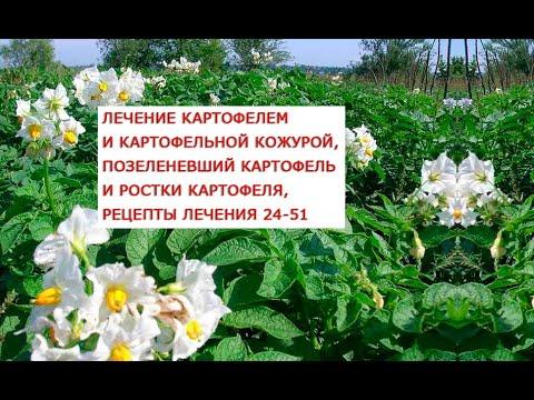 Лечение картофелем и картофельной кожурой, позеленевший картофель и ростки картофеля