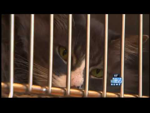 Vancouver animal shelter overcrowded, turning away cats