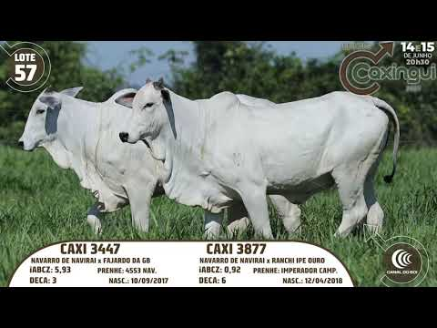 LOTE 57   CAXI 3877, CAXI 3447