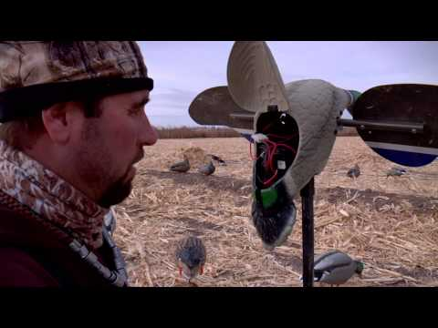 Early Goose Season In Oregon And Duck Hunting In Nevada