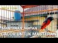 Mantenan Jantan Gacor Untuk Masteran  Mp3 - Mp4 Download