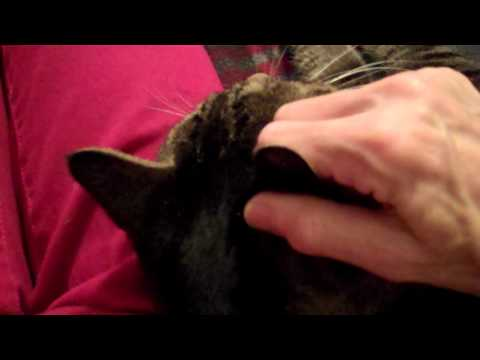acupressure on kitten doovi
