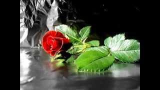 Le rose rosse no - I Cantur di Verolavecchia