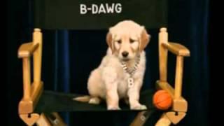 B-Dawg- i'm pawesome!