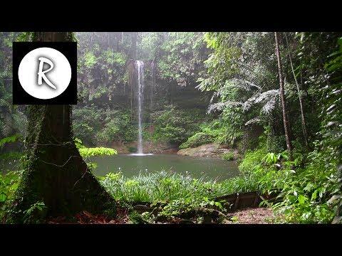 10 Hrs Rainforest