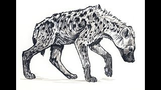 How to draw Spotted Hyena full body pencil drawing step by step