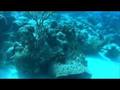 Diving in Banco Chinchorro, Mexico