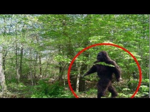 Bigfoot: True? Or Real. Trailer 2017 - 2018 Movie Trailer - Official [HD]