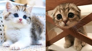 Baby Cats - Cute and Funny Cat Videos Compilation #18 | Aww Animals