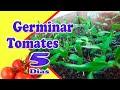 Gambar cover 3 Passos Simples de Como Plantar Tomate germinando Muito RÁPIDO